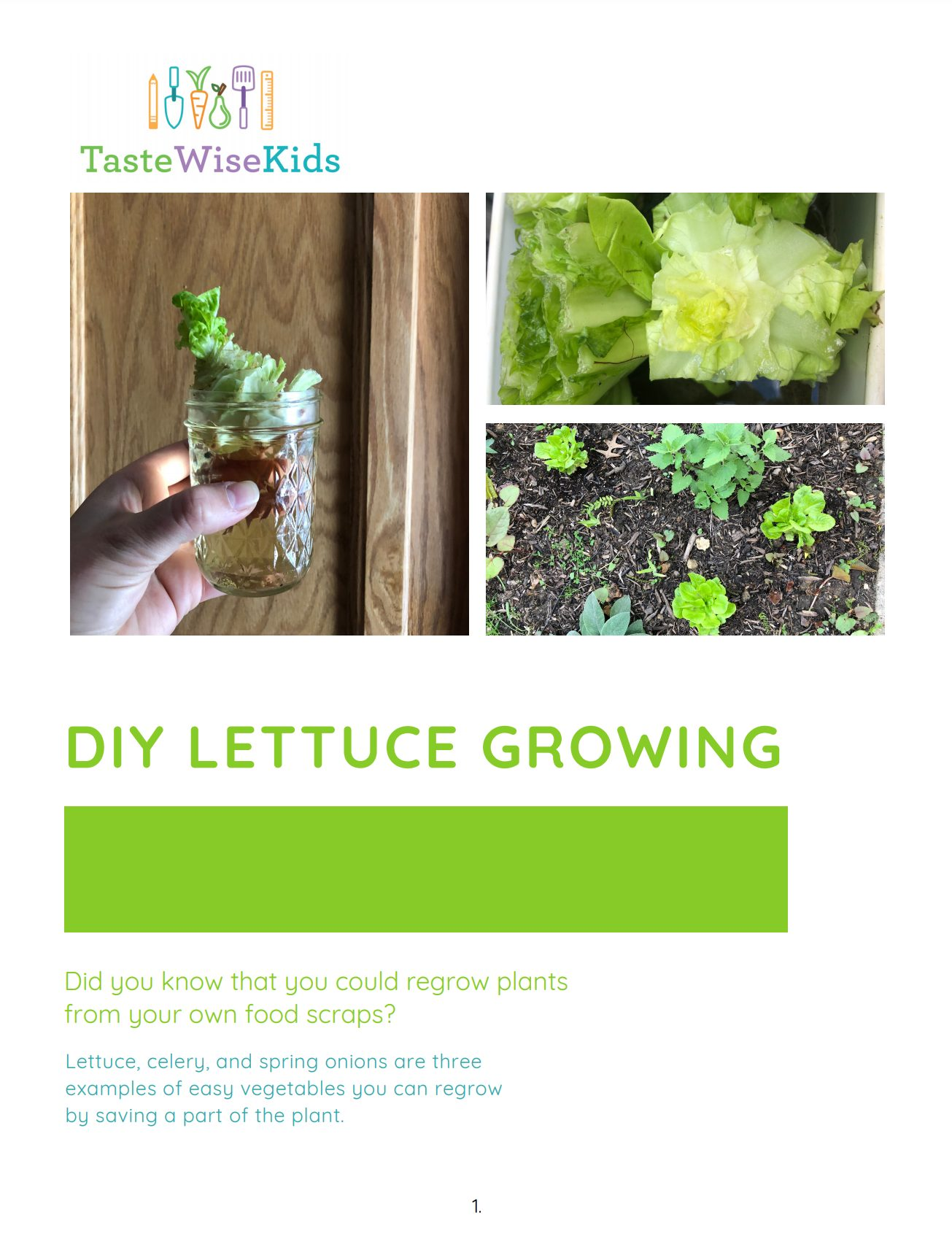 DIYLettuceGrowing