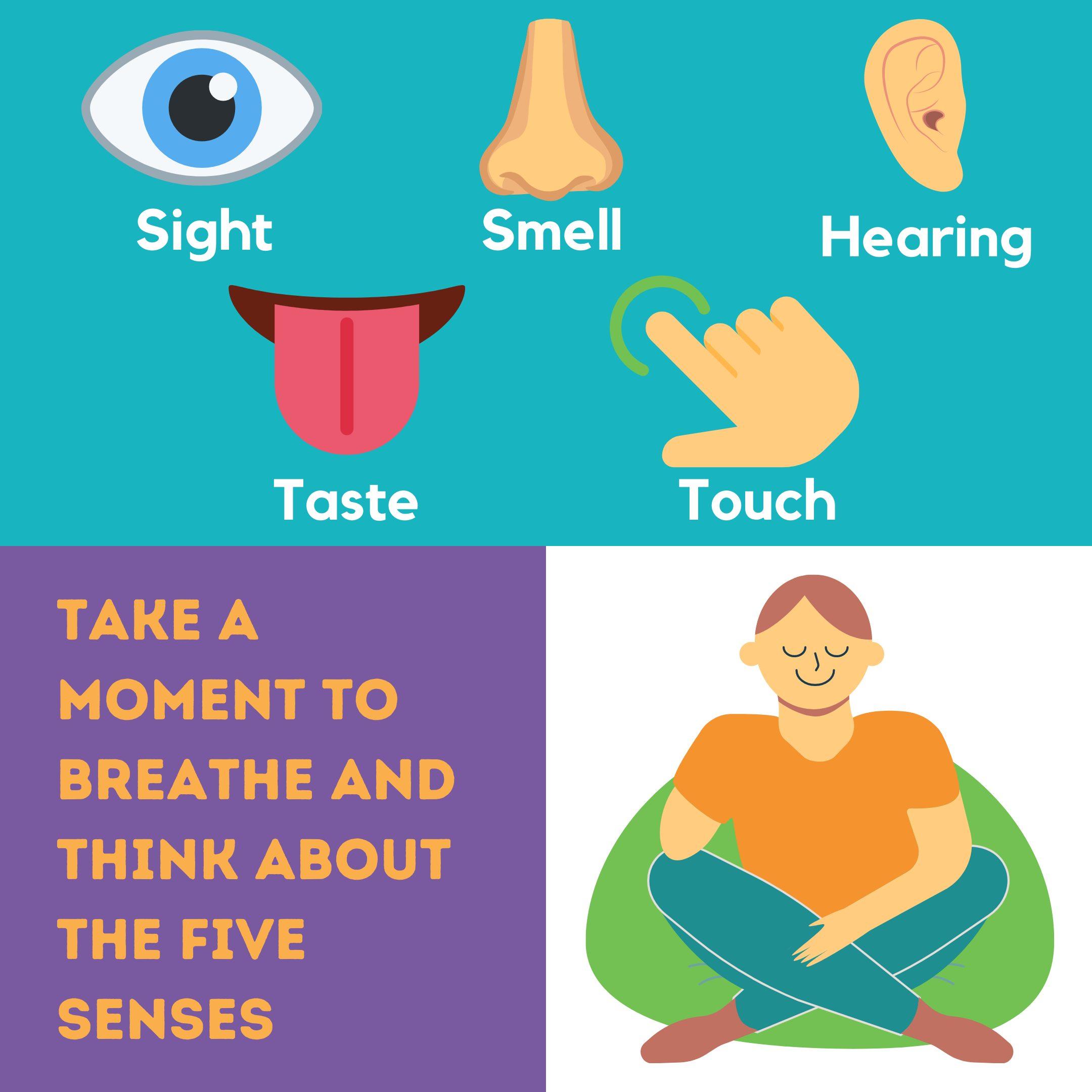 Five Senses Sheet